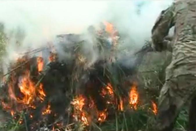 Полицейские сожгли в Кировском районе Приморья 100 000 кустов конопли