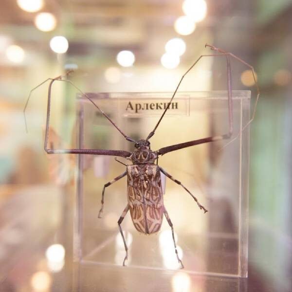 «БукашкиФест» в Биомузее