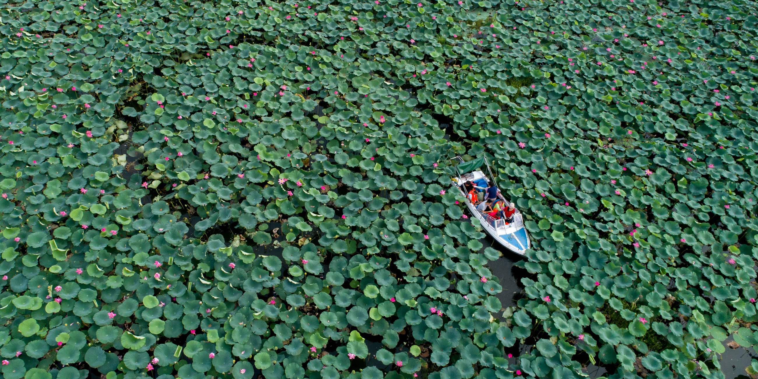 Катер повезет вас по узкой водной дорожке сквозь густые заросли лотосовых листьевФото: globallookpress.com